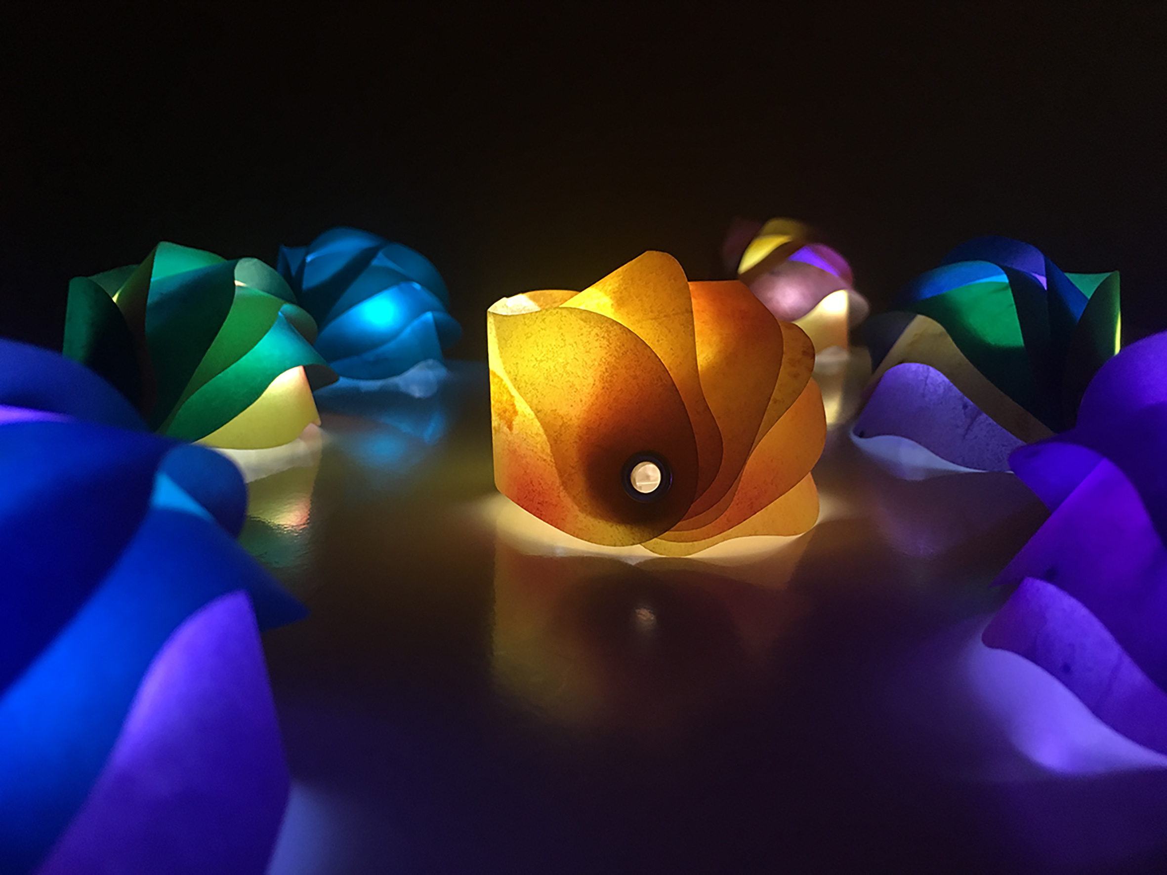 Armadillo Lights